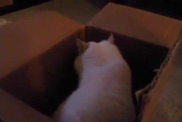 Chat aime toucher les choses