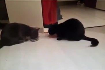 2 chats pour une gamelle