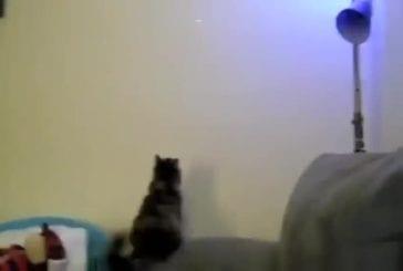 Kitty Jump échouer!