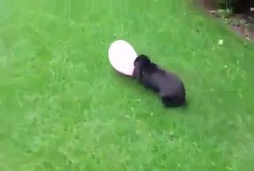 Lapin ballon