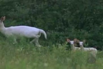 Une licorne a été vue à New York