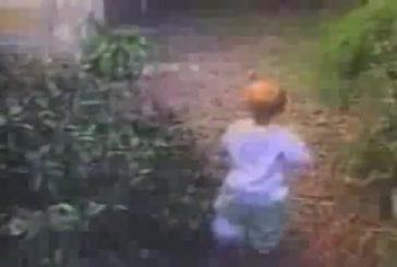 Chaton attaque un bébé