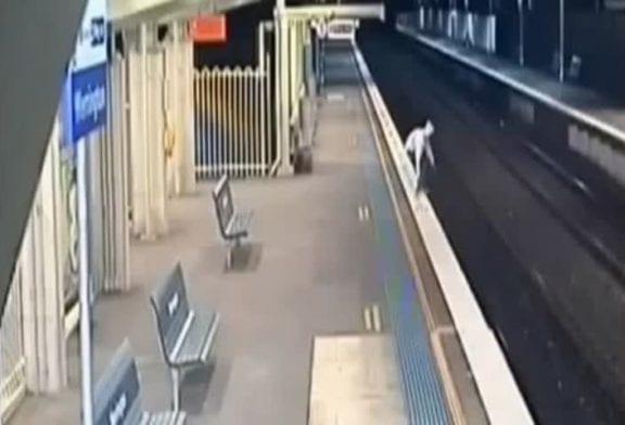Traverser les rails de train FAIL