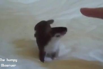 Compilation d'animaux mignons