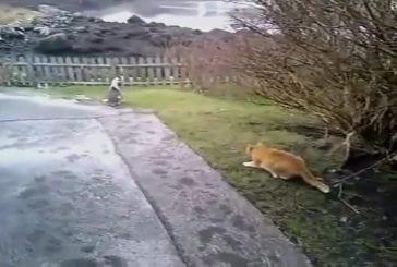 Mauvais partenaire de chasse