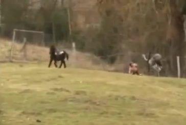 Une autruche attaque un enfant