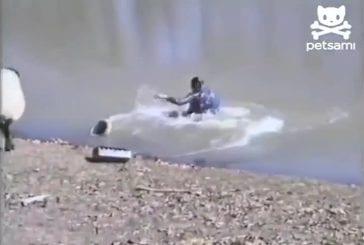 Moutons pousse les pêcheurs sans méfiance dans l'eau