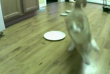Chat contre un distributeur de nourriture