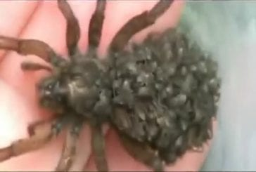 Avez-vous peur des araignées?