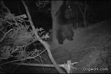 Ce qui se passe vraiment la nuit dans la forêt
