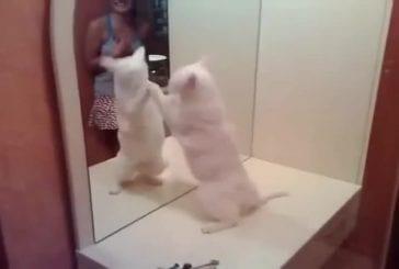 Ce chat est jaloux de son reflet