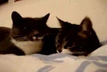 Des chats qui parlent