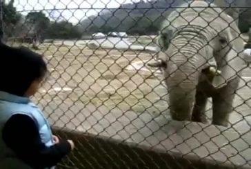 Eléphant fait un rot