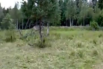 Le camouflage parfait
