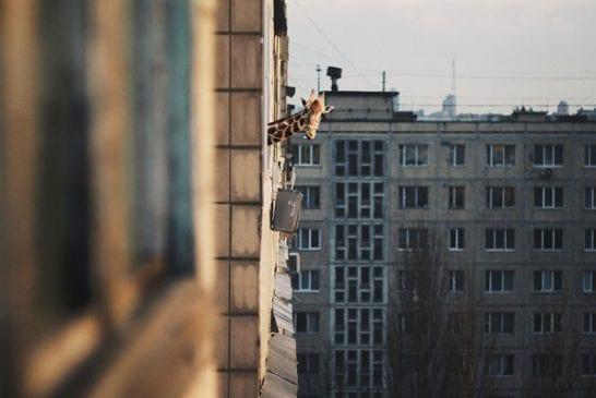 Une girafe domestique d'appartement