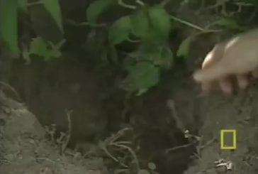 Chien adpote des lapins