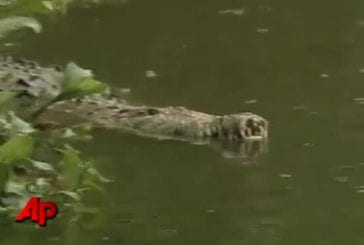 Homme et crocodile sont les meilleurs amis