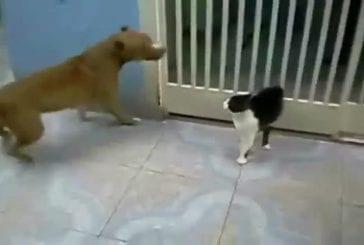 Chat se bat au sabre laser avec un chien