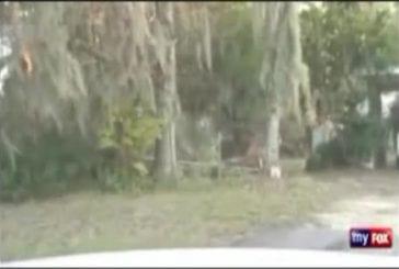 Accident de voiture durant une chasse à l'homme
