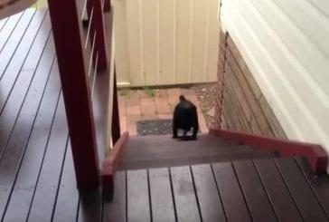 Carlin monte les escaliers