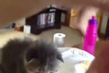 Chaton adorable se tortille les oreilles