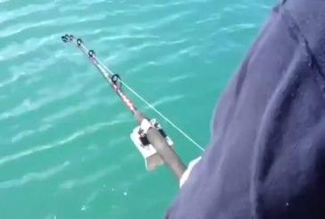Orque vole le poisson du pêcheur