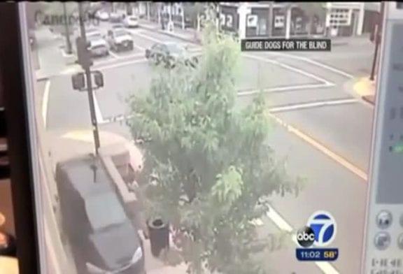 Chien-guide sauve son maître d'un terrible accident de voiture