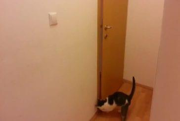 Chat ouvre cinq portes pour aller à l'extérieur
