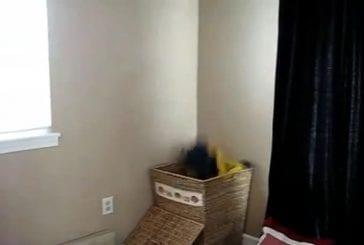 Chat aide à faire la lessive
