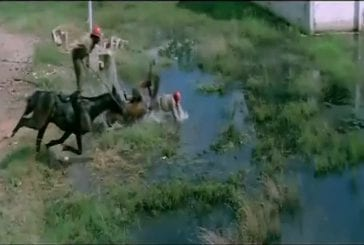 La meilleure chasse indienne