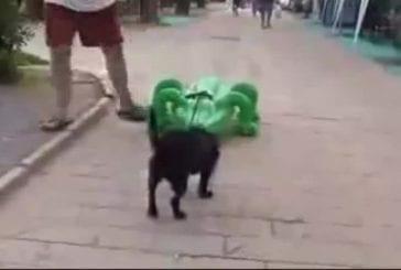 Alligator chasse un pauvre chien