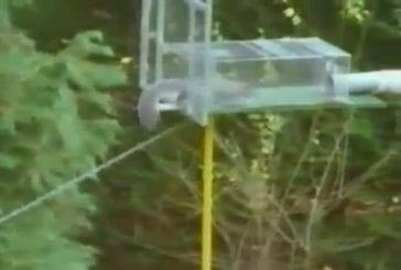 Course à obstacles pour écureuil