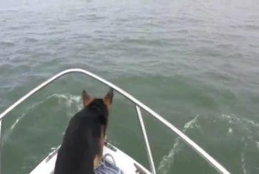 Chien saute sur les dauphins