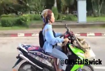 Perroquet vole à coté du scooter