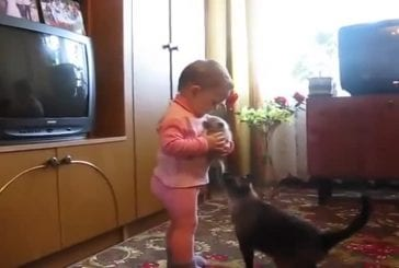 Une chatte - Son chatton - Un bébé
