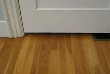 Chaton passe sous une porte