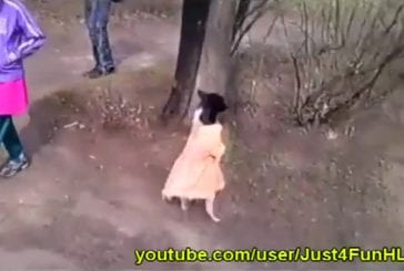 Chien en robe marche sur deux pattes
