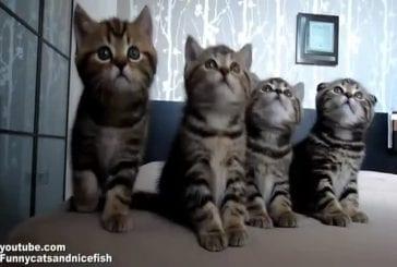 Des chatons très synchronisés