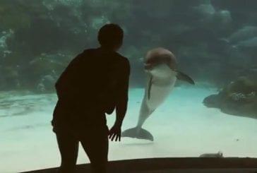 Fille divertit un dauphin en faisant de la gymnastique