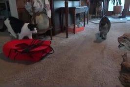 Chats ont peur de lynx en peluche