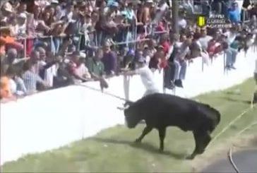 Il donne un coup de pied à un taureau