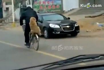 La vie tranquille d'un chien chinois