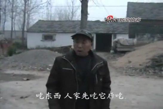 Un cochon chinois marche sur ses pattes avant