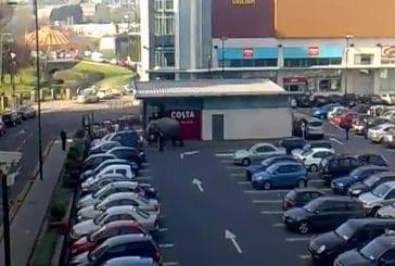 Un éléphant s'echappe d'un zoo de Blackpool