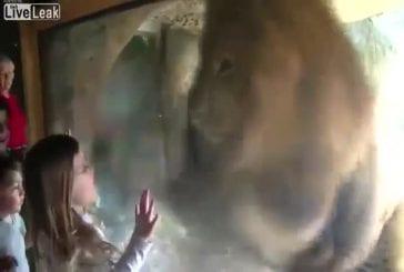 Une petite fille énerve un lion