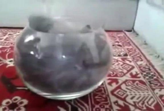 Les chats sont liquides