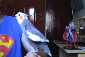 Oiseau chante le thème de Super Mario Bros