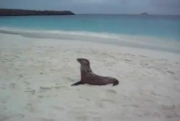Bébé lion de mer est très fatigué