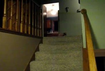 Cochonet descend l'escalier