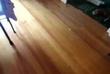 Bowling avec un chat